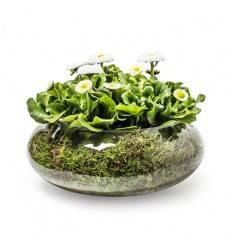 """Eco Bowl """"float"""" h 10 cm D 25 cm"""