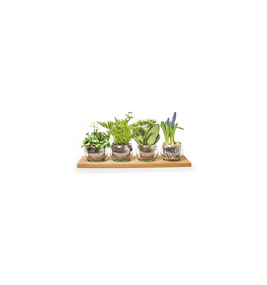 Holztablett Mit 4 Glasern Als Wohnraumdeko Kaufen