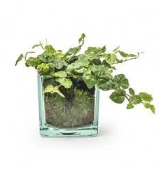 Eco Glaskasten Cube groß Höhe 10x10x10 cm