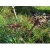 Edelrost Libelle groß 30 cm mit Stecker 80 cm