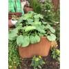 Hochbeet Metall aus Edelrost 200 cm lang ideal für Kürbisse Garten Hochbeet