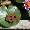 Frühlingsdeko Marienkäfer Edelrost