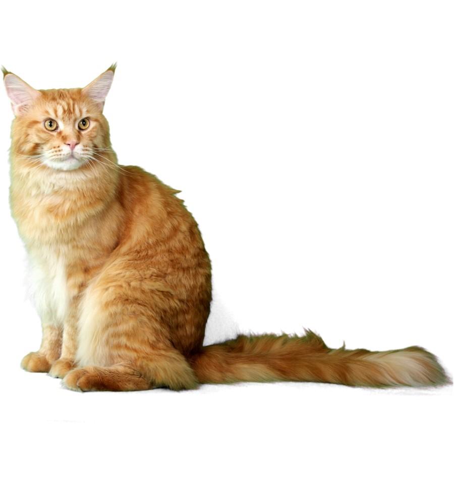 Charmant Katzen Färbung Seite Fotos - Entry Level Resume Vorlagen ...